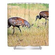 Sandhill Cranes Ll Shower Curtain