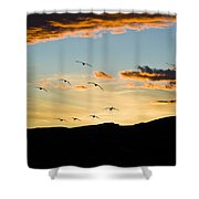 Sandhill Cranes In New Mexico Shower Curtain
