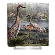 Sandhill Cranes On Alert Shower Curtain