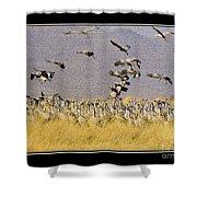 Sandhill Cranes On The Ground Shower Curtain