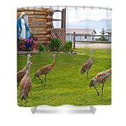 Sandhill Cranes On The Lawn By The Statue Of Mary In Homer-alaska Shower Curtain