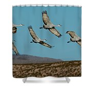 Sandhill Cranes Over Chupadera Mountains Shower Curtain