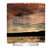 Sandhill Cranes Roosting At Sunset Shower Curtain