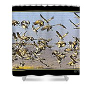 Sandhill Cranes Startled 2 Shower Curtain