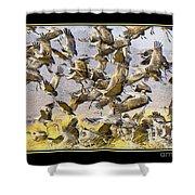 Sandhill Cranes Startled Shower Curtain