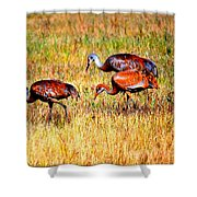 Sandhill Family Shower Curtain