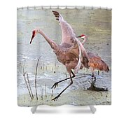 Sandhill Leap Of Faith Shower Curtain