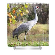 Sandhill Passing By Shower Curtain