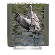 Sandhill Symphony Shower Curtain