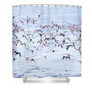 Sandpiper Abstract Shower Curtain