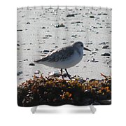 Sandpiper And Seaweed Shower Curtain