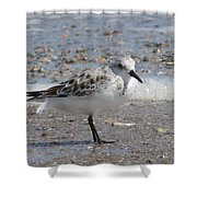 Sandpiper And Shells Shower Curtain