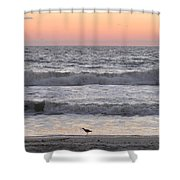 Sandpiper At Sunrise Shower Curtain