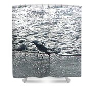Sandpiper Finds Food In Surf Shower Curtain