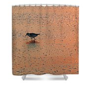 Sandpiper On Shoreline Shower Curtain