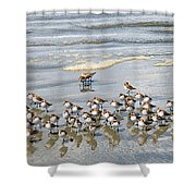 Sandpiper Reflections Shower Curtain
