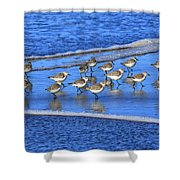 Sandpiper Symmetry Shower Curtain