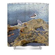Sandpipers On Coral Beach Shower Curtain