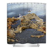Sandpipers 1 Shower Curtain