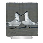 Sandwich Terns Shower Curtain