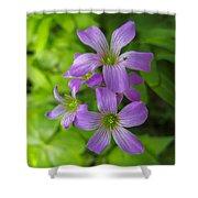 Sandy Creek Wildflowers Shower Curtain