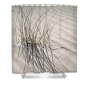 Sandy Grass. Coastal Dunes In Holland Shower Curtain