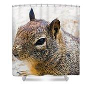 Sandy Nose Squirrel Shower Curtain