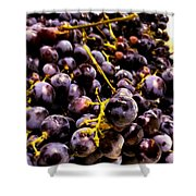 Sangiovese Grapes Shower Curtain