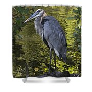 Sanibel Great Blue Heron Shower Curtain