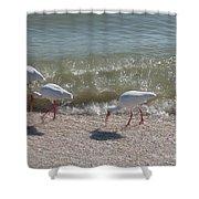 Sanibel Ibis Shower Curtain