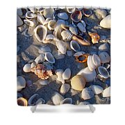 Sanibel Island Shells 1 Shower Curtain