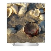 Sanibel Island Shells 5 Shower Curtain