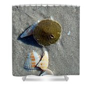 Sanibel Sand Dollar 1 Shower Curtain