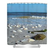 Sanibel Sand Dollar 2 Shower Curtain