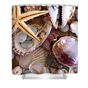 Sanibel Shells Shower Curtain