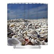 Sanibel Shells Shower Curtain