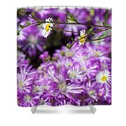 Santa Barbara Daisies In Ice Plant Shower Curtain