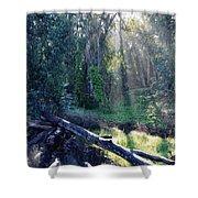 Santa Barbara Eucalyptus Forest II Shower Curtain