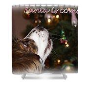 Santa - Christmas - Pet Shower Curtain