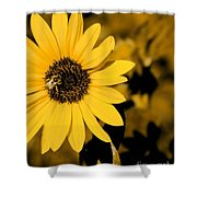 Santa Fe Sunflower 1 Shower Curtain