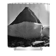 Santa Hat And Shells 2 12/17 Shower Curtain