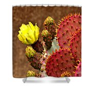Santa Rita Cactus Shower Curtain
