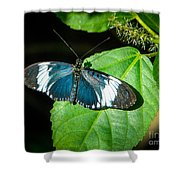 Sapho Longwing Butterfly Shower Curtain