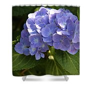 Sapphire Dream Shower Curtain