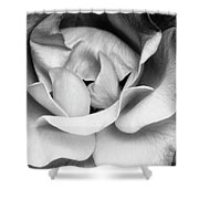 Sapphire Rose Bw Palm Springs Shower Curtain
