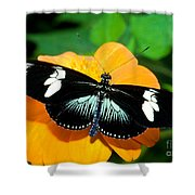 Sara Longwing Butterfly Shower Curtain