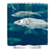 Sardines Shower Curtain