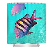 Sargeant Fish Shower Curtain