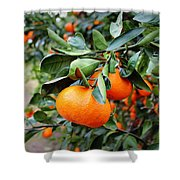 Satsumas Shower Curtain