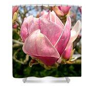 Saucer Magnolia Bloom Shower Curtain
